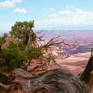 White Rim Overlook, Canyonlands National Park, Utah