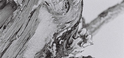 Dead Tree (detail) in the Snow, Mount Hood