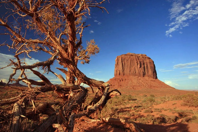 Monument Valley, Dying Juniper