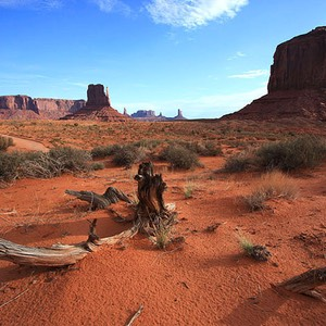 Monument Valley, Red Sand, Dead Tree