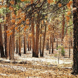 Woods between Redmond and Sisters, Oregon