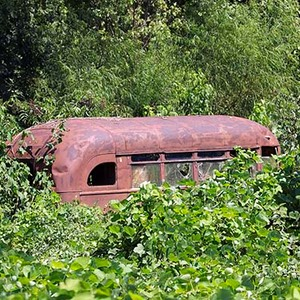 Rusted School Bus in Kudzu
