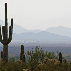 Saguaro, US Route 60, towards Tucson, AZ