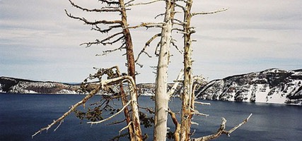 Tree Overlooking a Wintry Crater Lake