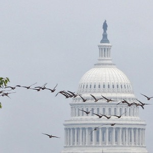 Geese in Flight, The National Mall, United States Capitol