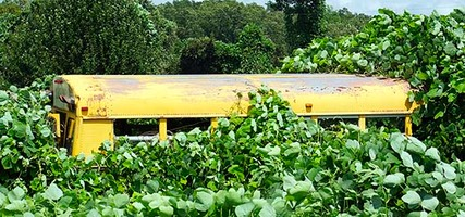 Yellow School Bus in Kudzu